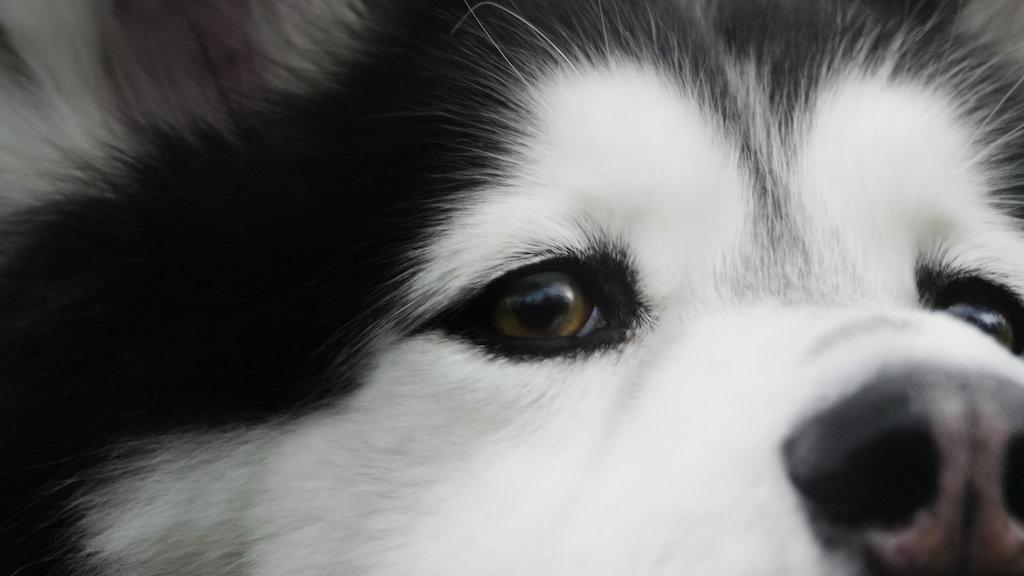 Dogs | Netflix Official Site
